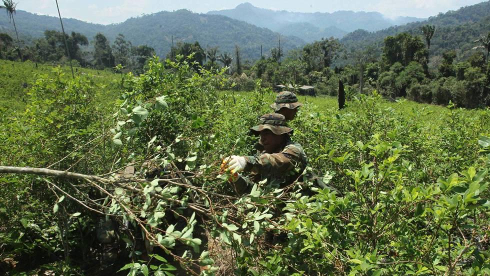segun-la-onu-colombia-sigue-siendo-el-mayor-productor-de-coca